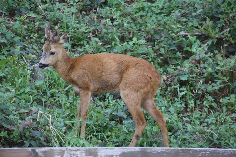 Kleiner Besucher am Waldrand hinter dem Haus